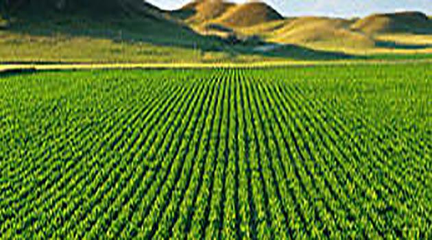 Fiscalizarán programas del Ministerio de Agricultura